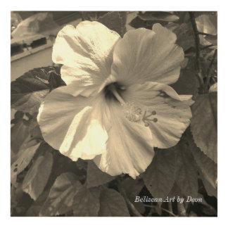 Belize Art - Belizean Art by Deon - Flower Series