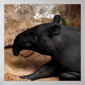 Belize Baird s Tapir Print
