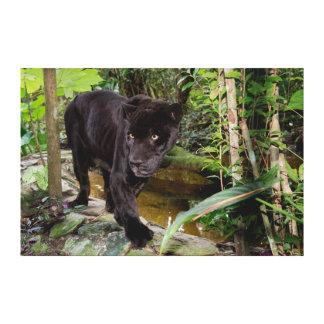 Belize City Zoo. Black panther Canvas Print