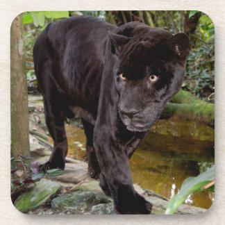 Belize City Zoo. Black panther Drink Coaster
