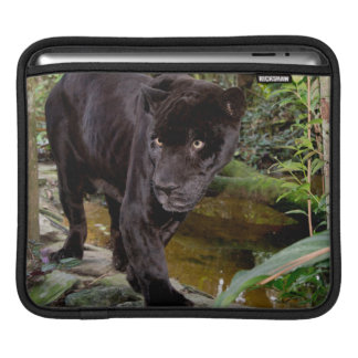 Belize City Zoo. Black panther iPad Sleeve