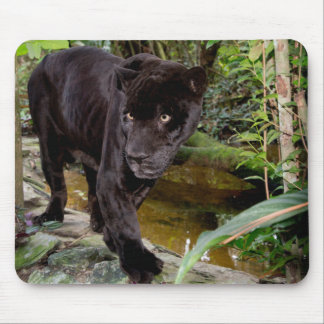 Belize City Zoo. Black panther Mouse Pad