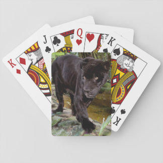 Belize City Zoo. Black panther Poker Cards