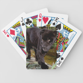 Belize City Zoo. Black panther Card Deck