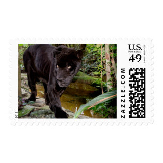 Belize City Zoo. Black panther Postage Stamp