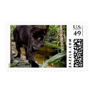 Belize City Zoo. Black panther Postage Stamp