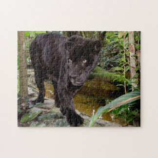 Belize City Zoo. Black panther Jigsaw Puzzle