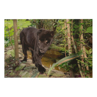 Belize City Zoo. Black panther Wood Wall Decor