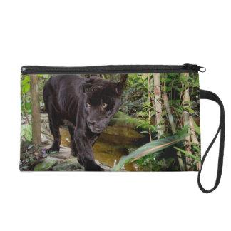 Belize City Zoo. Black panther Wristlet Purse
