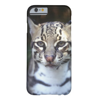Belize, Cockscomb Jaquar Preserve, Ocelot Barely There iPhone 6 Case