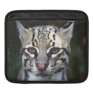 Belize, Cockscomb Jaquar Preserve, Ocelot iPad Sleeve
