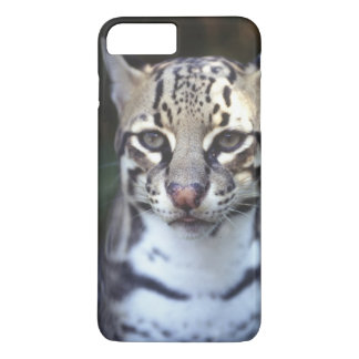 Belize, Cockscomb Jaquar Preserve, Ocelot iPhone 7 Plus Case