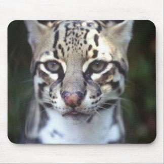Belize, Cockscomb Jaquar Preserve, Ocelot Mouse Pad