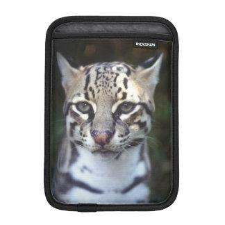 Belize, Cockscomb Jaquar Preserve, Ocelot Sleeve For iPad Mini
