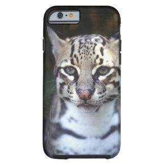 Belize, Cockscomb Jaquar Preserve, Ocelot Tough iPhone 6 Case
