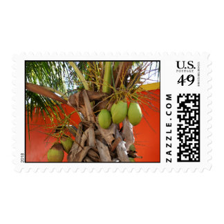 Belize Palm Stamp