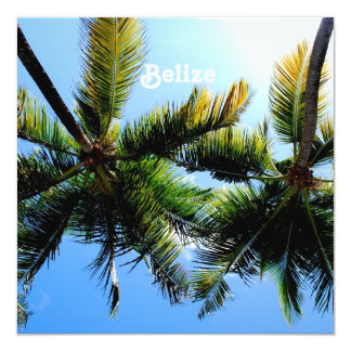 Belize Palm Trees Card