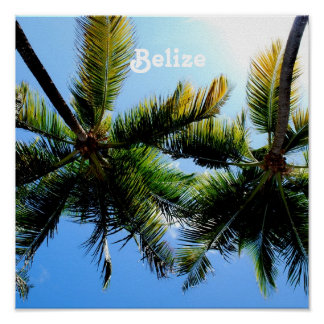 Belize Palm Trees Posters