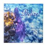 Belize! Purple Sea Fan  Tile Small Square Tile