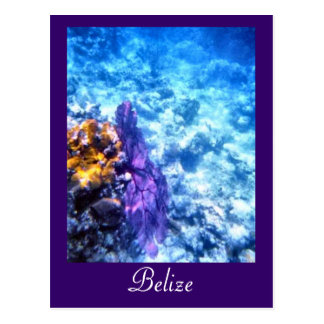 Belize Sea Fan Custom Postcard
