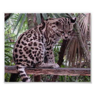 Belize Zoo Poster
