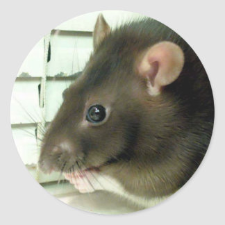 Bell The Rat Stickers