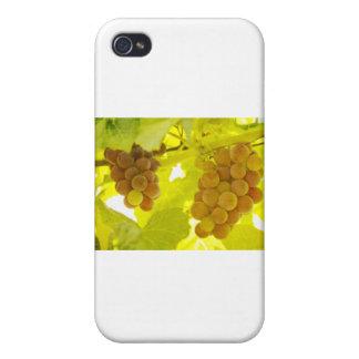 Bella arte de la vid de uvas iPhone 4 fundas