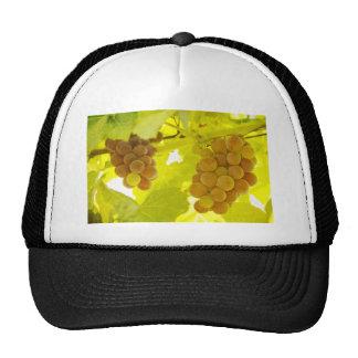 Bella arte de la vid de uvas gorras