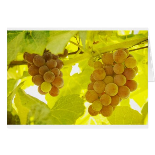 Bella arte de la vid de uvas tarjetas