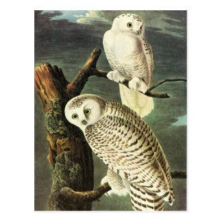 Bella arte de los búhos de John James Audubon Postal