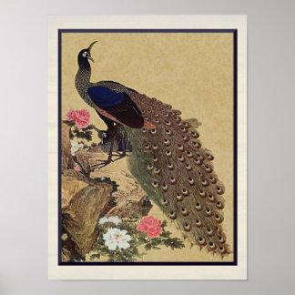 Bella arte del japonés del vintage del pavo real y póster