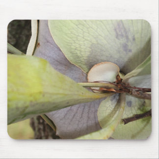 Bella Bromeliad Mouse Pad