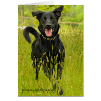 Bella, Happy to See You! Greeting Card