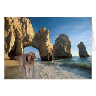 Bella In Cabo San Lucas Mexico Greeting Card