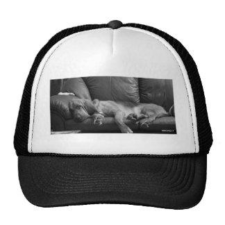 Bella the Bloodhound sleeping Trucker Hat