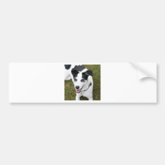 Bella the Rescue Dog Car Bumper Sticker