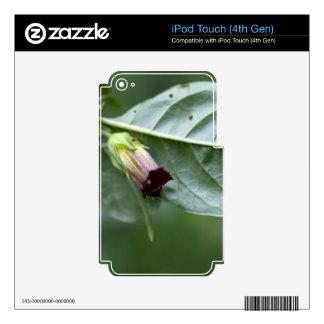 Belladona o nightshade mortal (belladona del iPod touch 4G calcomanías