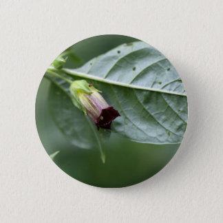 Belladonna or deadly nightshade (Atropa belladonna Button