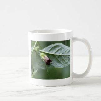 Belladonna or deadly nightshade (Atropa belladonna Coffee Mug