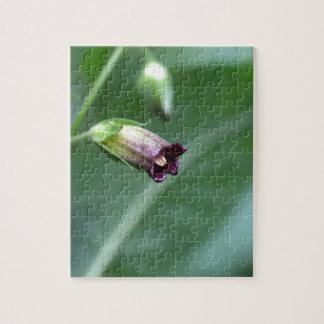 Belladonna or deadly nightshade (Atropa belladonna Jigsaw Puzzle