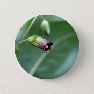 Belladonna or deadly nightshade (Atropa belladonna Pinback Button