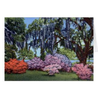 Belle Isle Gardens Georgetown South Carolina Cards