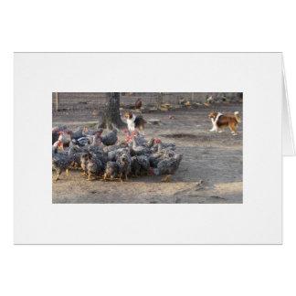 Belle & Laddie Working A Flock Card