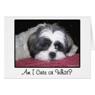Belle The Shih Tzu Dog Greeting Card