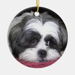 Belle The Shih Tzu Gifts On Zazzle