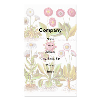 Belles in Pink Double-Sided Standard Business Cards (Pack Of 100)