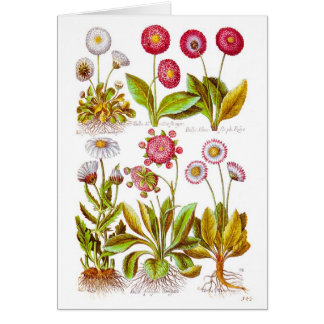 Belles in Pink Stationery Note Card