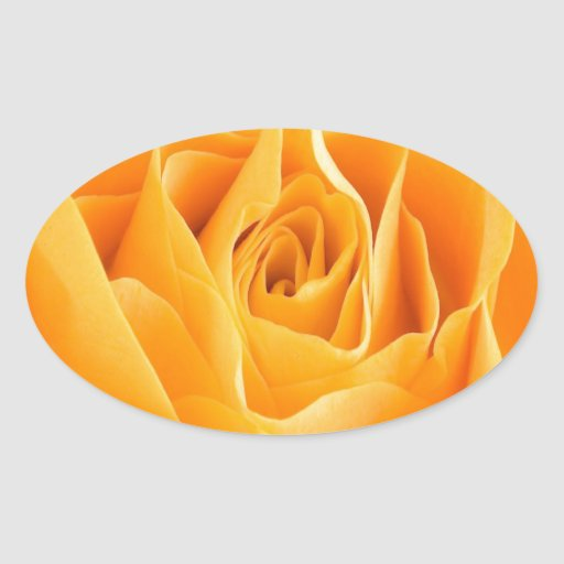 belleza abierta del rosa para el amor pegatina óval
