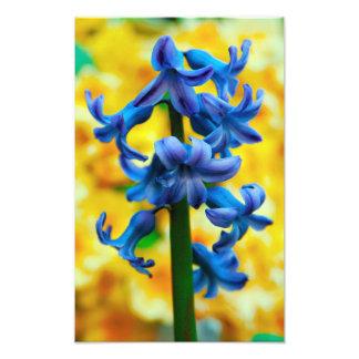 Belleza azul fotografías