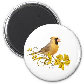 Belleza cardinal amarilla imanes de nevera